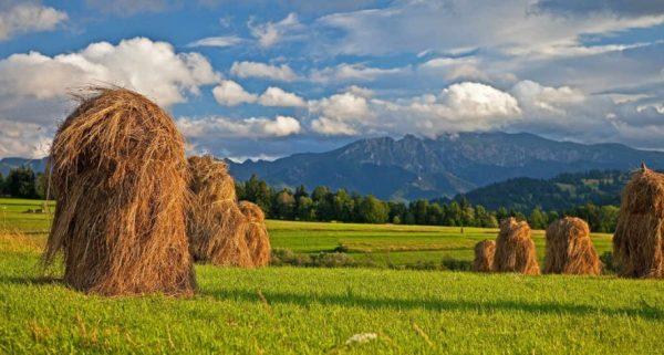 Landwirtschaft – was ist das?